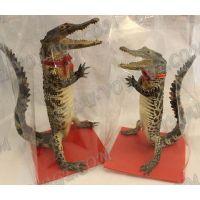 A stuffed crocodile - TV000689