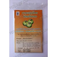 Garcinia cambogia - natural herbal infusion slimming - TV001066